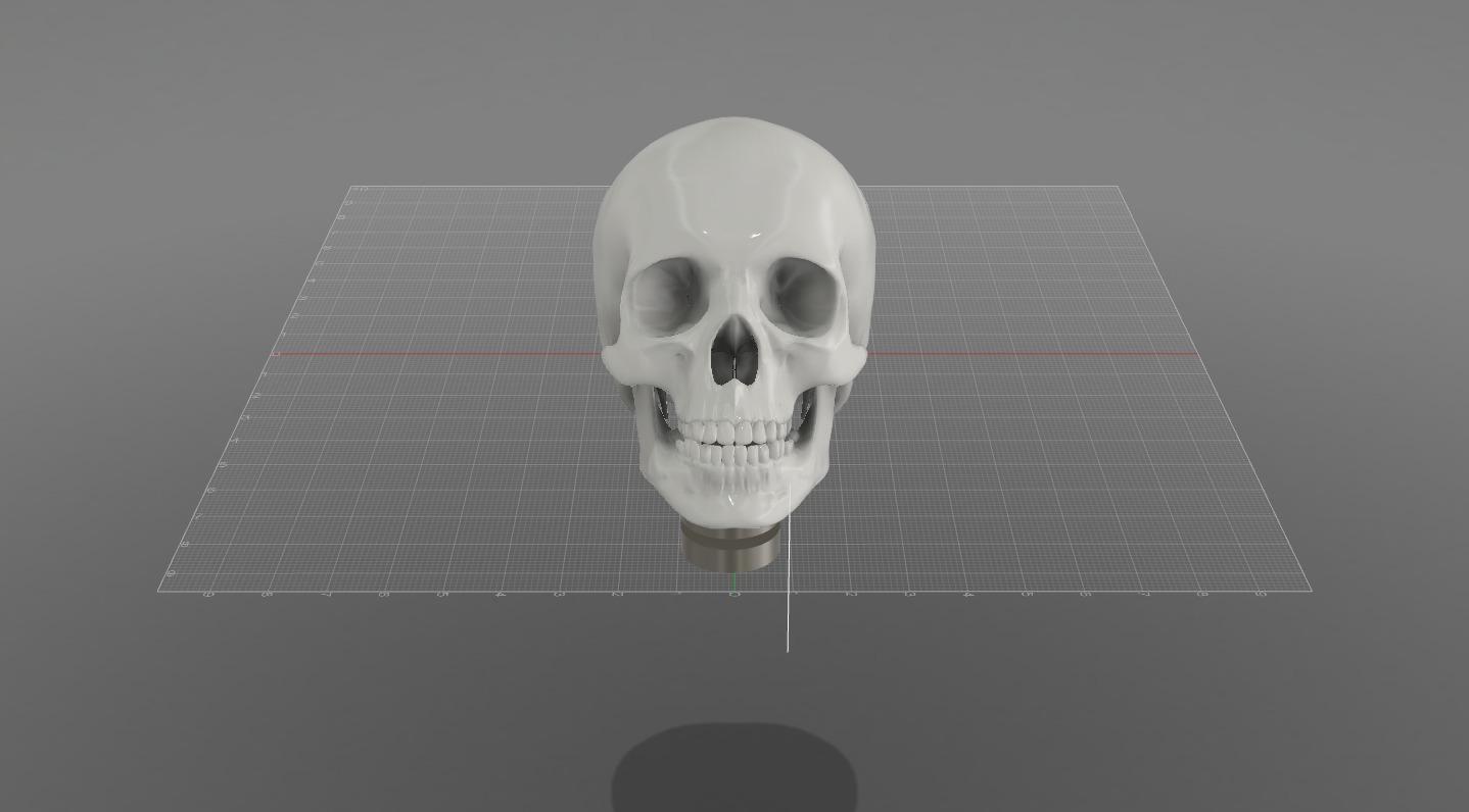 autodesk maya templates - human skull autodesk online gallery